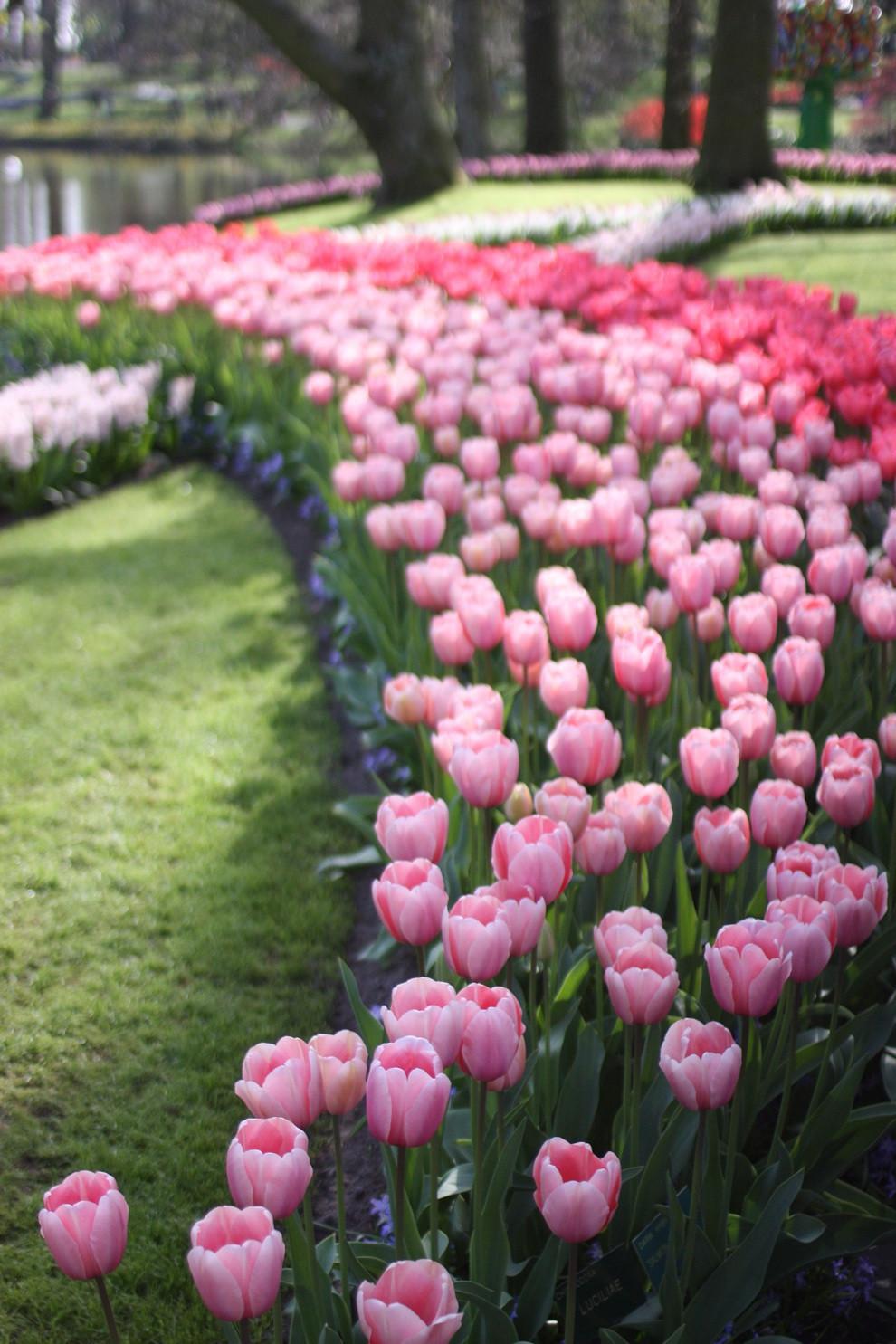 Say đắm với cảnh sắc vườn hoa đẹp nhất Hà Lan-8