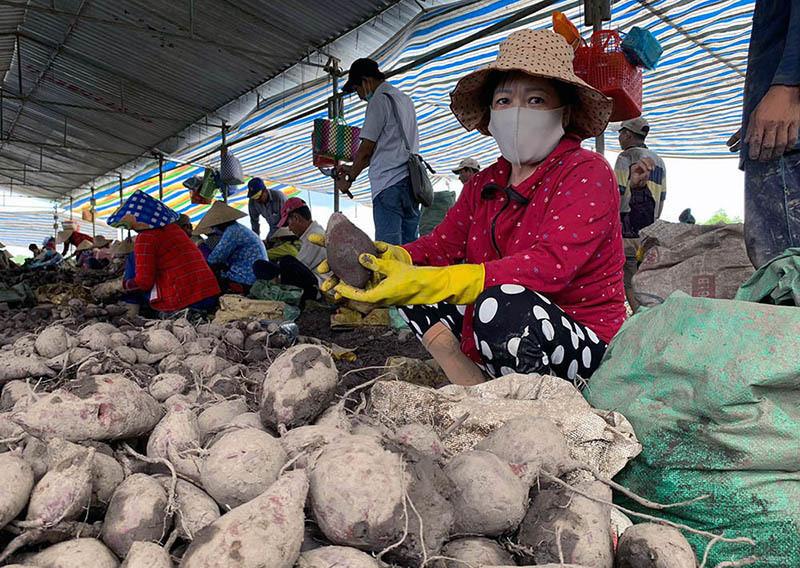 'Tắc đường' sang Trung Quốc, khoai chất đống, mít dội chợ, dân trắng tay-1
