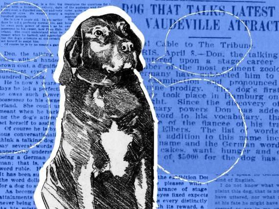 Bí mật về đội quân chó biết nói của Đức Quốc xã-1