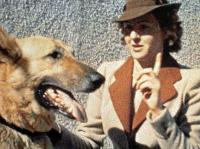 Bí mật về đội quân chó biết nói của Đức Quốc xã-3
