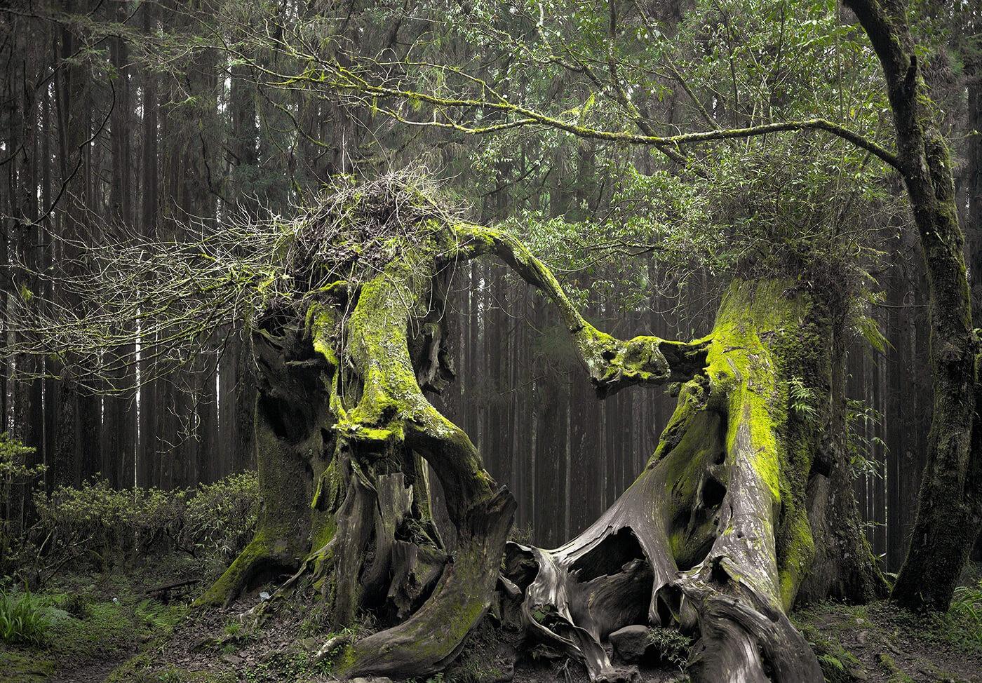 Câu chuyện về khu rừng ma ám được mệnh danh là tam giác quỷ-2