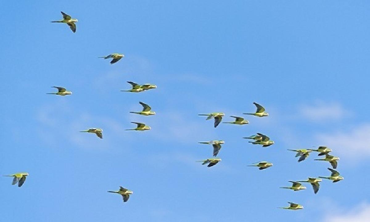 988 triệu chim di cư chết mỗi năm do tông vào các tòa nhà ở Mỹ-2