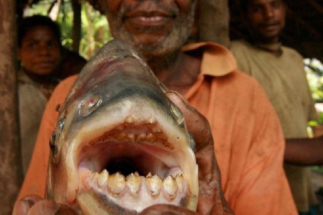 Rùng mình với loài cá chuyên đớp vào chỗ mà nam giới cực kỳ sợ-1