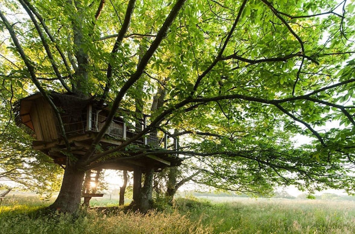 Những tuyệt tác nhà lơ lửng trên cây đẹp tới mức khó tin-14