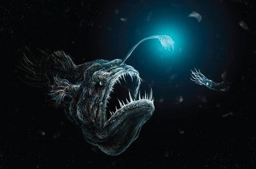 Kỳ lạ những loài sinh vật có thể phát sáng trong tự nhiên-9