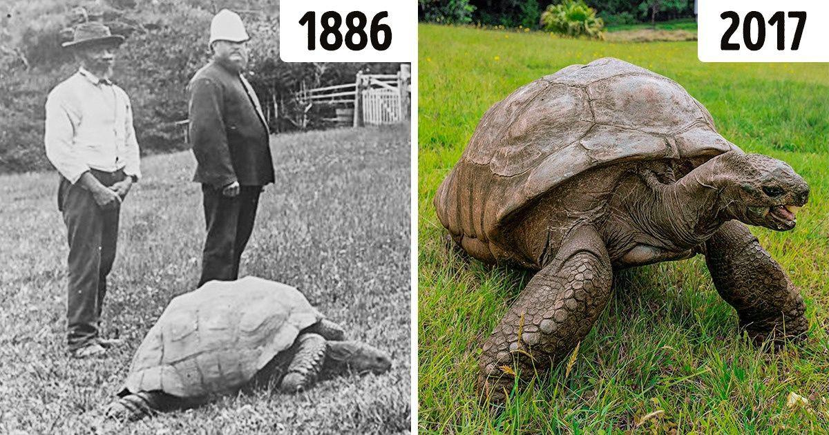 Cụ rùa gần 200 tuổi đang sống ở đâu?-1