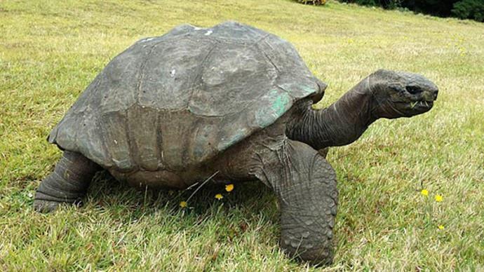 Cụ rùa gần 200 tuổi đang sống ở đâu?-2