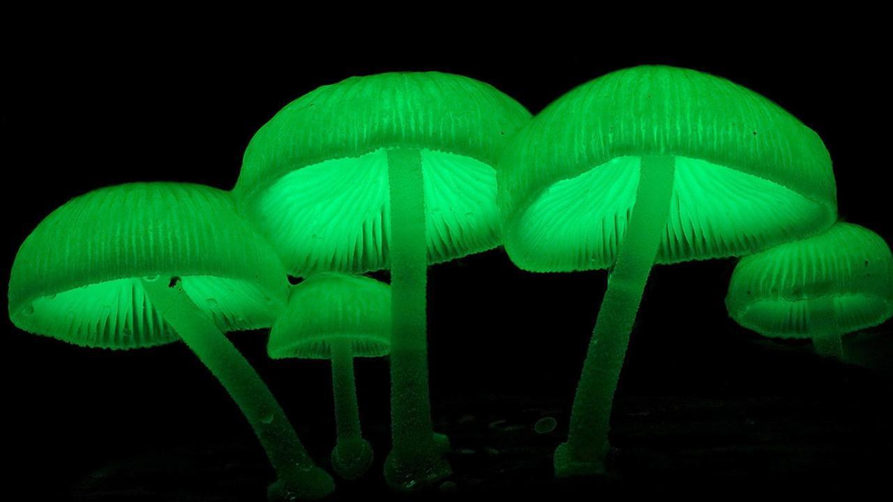 Kỳ lạ những loài sinh vật có thể phát sáng trong tự nhiên-8