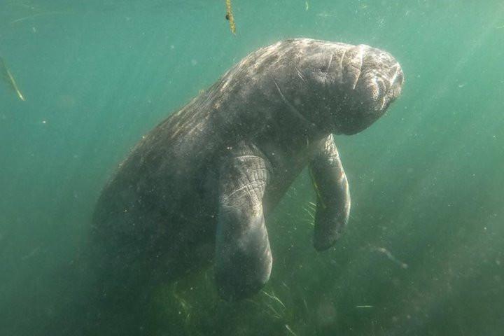 Tình trạng lợn biển chết hàng loạt ở Florida chỉ ra hàng loạt vấn đề về môi trường sống tại đây-1