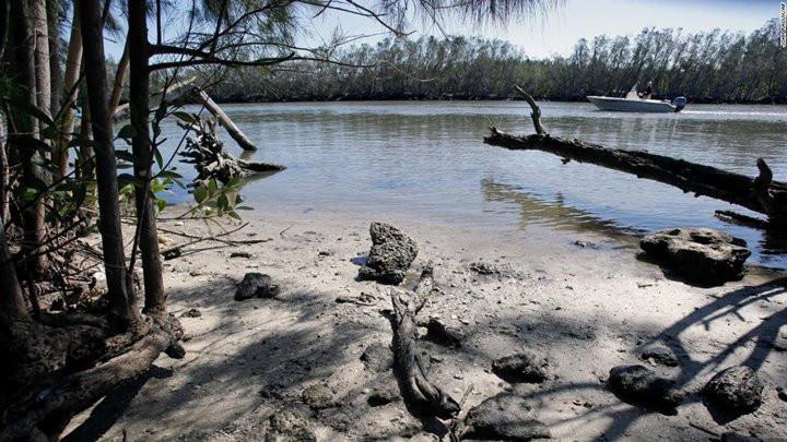 Tình trạng lợn biển chết hàng loạt ở Florida chỉ ra hàng loạt vấn đề về môi trường sống tại đây-5