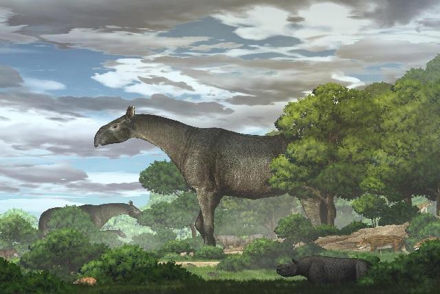 Hóa thạch tê giác siêu khổng lồ, lớn hơn cả voi ma mút ở Trung Quốc-1