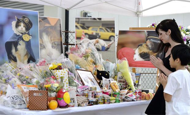 Chỉ nhờ một cô mèo hoang, công ty Nhật Bản lãi to 280 tỷ, thoát khỏi cảnh phá sản trong gang tấc-16