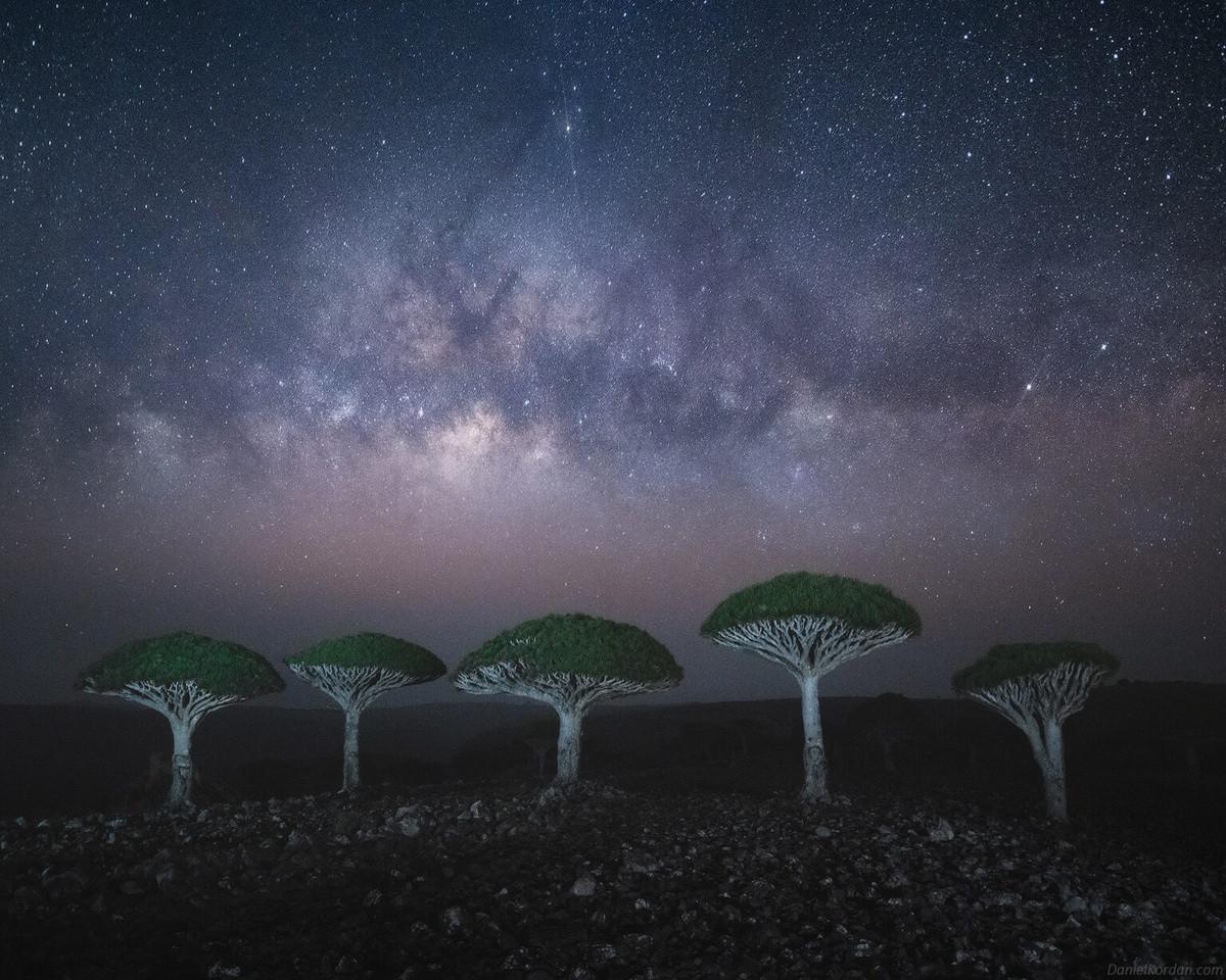 Kỳ lạ loài cây trăm tuổi có rễ mọc ngược ở hòn đảo ngoài hành tinh-6