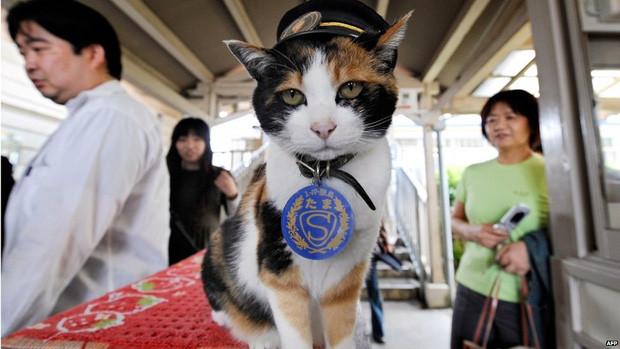 Chỉ nhờ một cô mèo hoang, công ty Nhật Bản lãi to 280 tỷ, thoát khỏi cảnh phá sản trong gang tấc-1