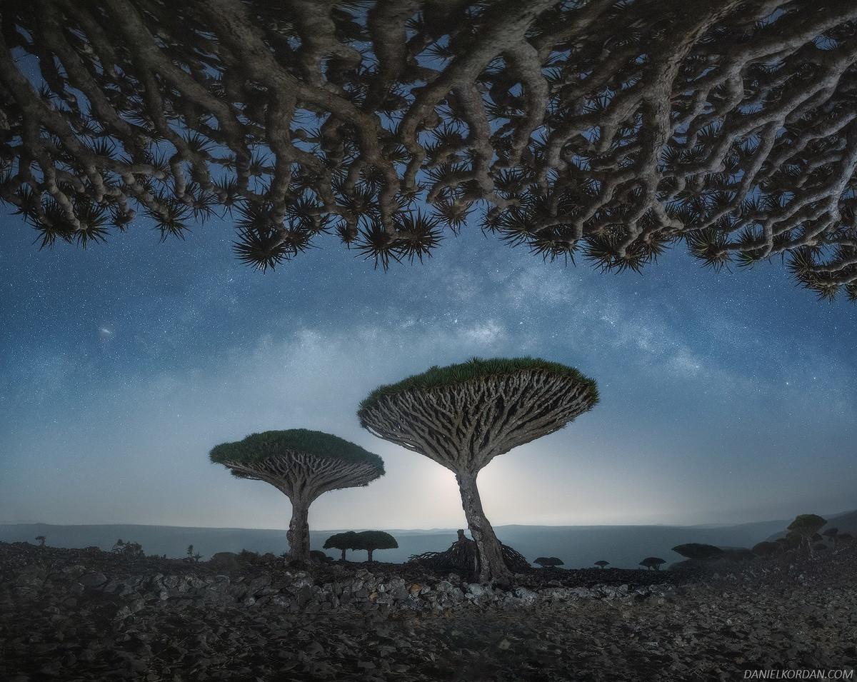 Kỳ lạ loài cây trăm tuổi có rễ mọc ngược ở hòn đảo ngoài hành tinh-2