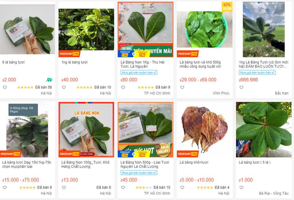 Thứ lá bình thường, bỏ đi ở Việt Nam bỗng nhiên được săn mua giá cao-1