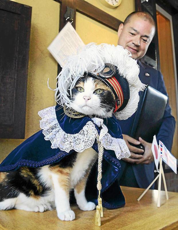 Chỉ nhờ một cô mèo hoang, công ty Nhật Bản lãi to 280 tỷ, thoát khỏi cảnh phá sản trong gang tấc-4