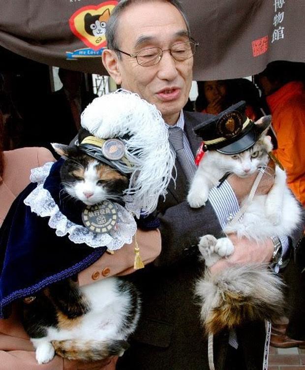 Chỉ nhờ một cô mèo hoang, công ty Nhật Bản lãi to 280 tỷ, thoát khỏi cảnh phá sản trong gang tấc-6