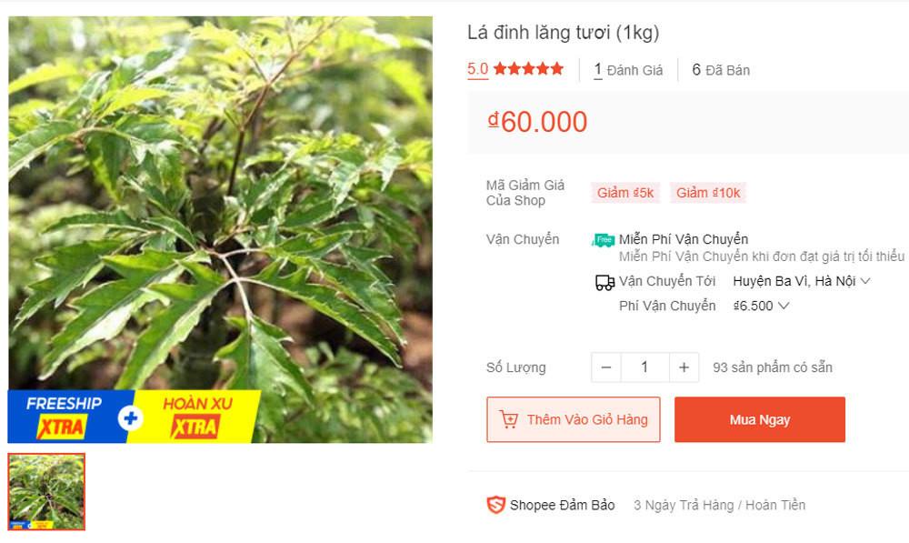 Thứ lá bình thường, bỏ đi ở Việt Nam bỗng nhiên được săn mua giá cao-6