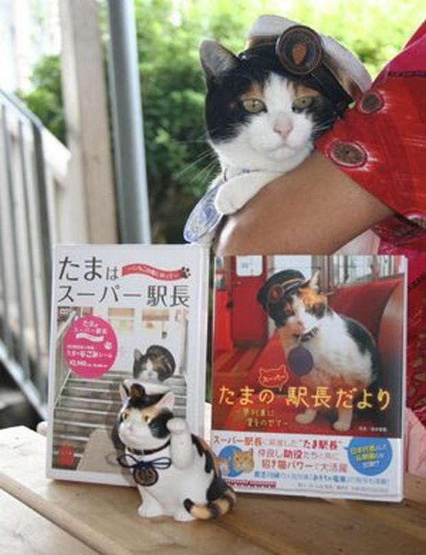 Chỉ nhờ một cô mèo hoang, công ty Nhật Bản lãi to 280 tỷ, thoát khỏi cảnh phá sản trong gang tấc-13