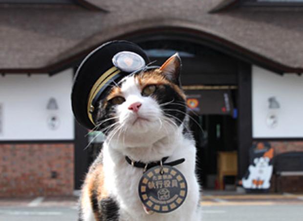 Chỉ nhờ một cô mèo hoang, công ty Nhật Bản lãi to 280 tỷ, thoát khỏi cảnh phá sản trong gang tấc-3