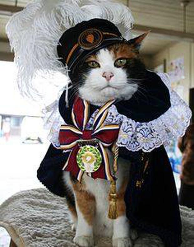 Chỉ nhờ một cô mèo hoang, công ty Nhật Bản lãi to 280 tỷ, thoát khỏi cảnh phá sản trong gang tấc-7