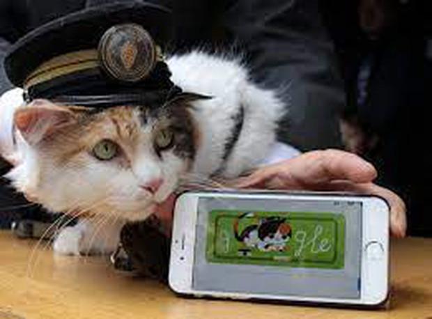 Chỉ nhờ một cô mèo hoang, công ty Nhật Bản lãi to 280 tỷ, thoát khỏi cảnh phá sản trong gang tấc-5