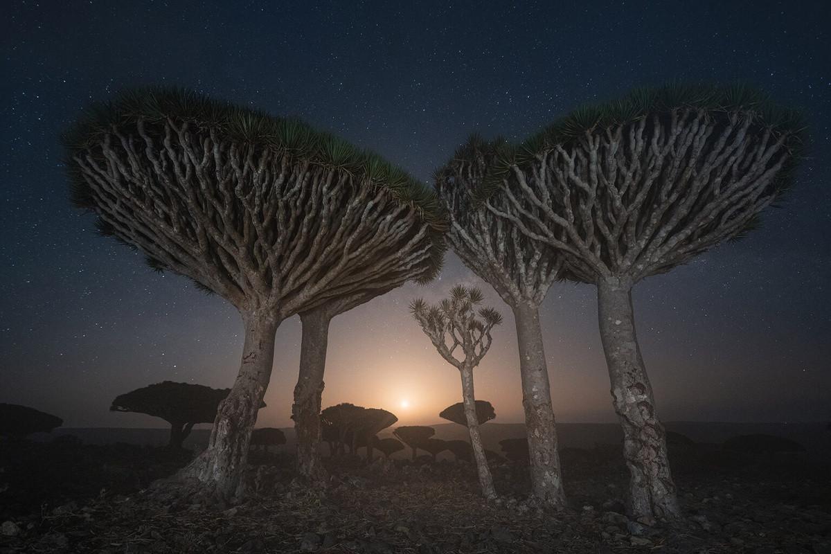 Kỳ lạ loài cây trăm tuổi có rễ mọc ngược ở hòn đảo ngoài hành tinh-4
