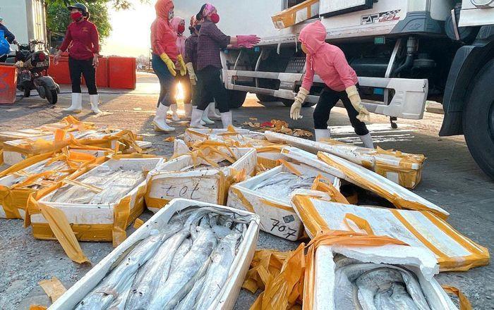 Giá còn 5.000 đồng/kg, cá hố làm thức ăn chăn nuôi-1