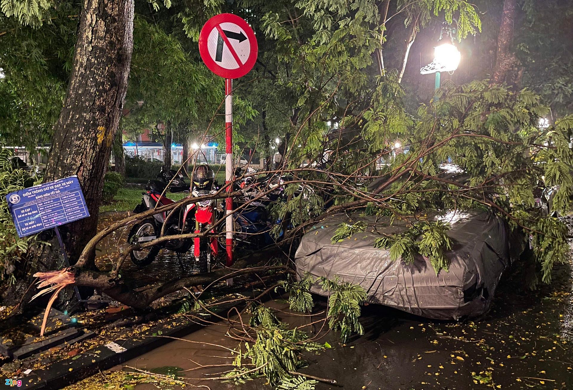 Mưa lớn, cây đổ khắp phố phường Hà Nội-10