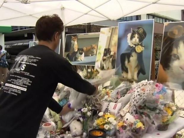 Chỉ nhờ một cô mèo hoang, công ty Nhật Bản lãi to 280 tỷ, thoát khỏi cảnh phá sản trong gang tấc-15