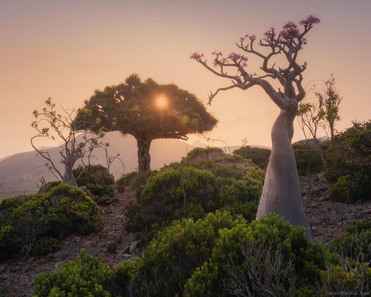 Kỳ lạ loài cây trăm tuổi có rễ mọc ngược ở hòn đảo ngoài hành tinh-7
