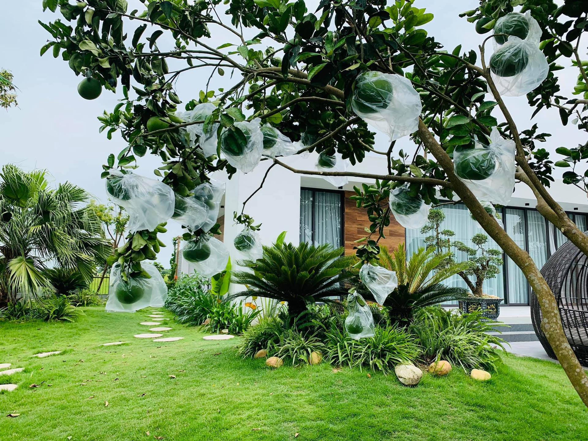 Phòng tắm lộ thiên, mái là giàn cây leo xanh mát trong ngôi nhà hộp 1 tầng-4