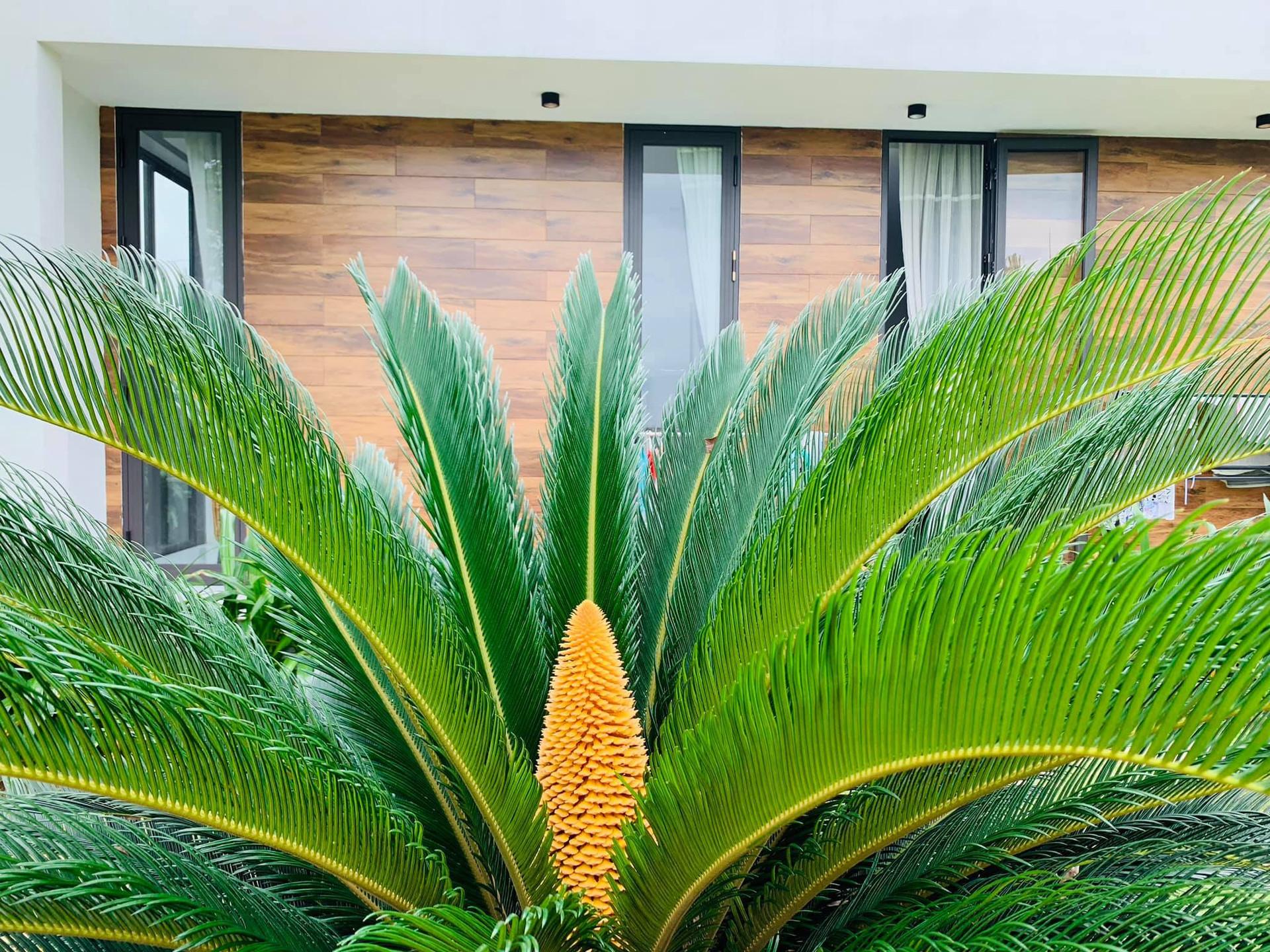 Phòng tắm lộ thiên, mái là giàn cây leo xanh mát trong ngôi nhà hộp 1 tầng-6