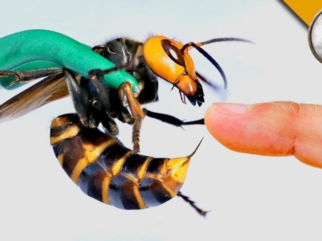 Nghịch dại thử để ong bắp cày đốt, anh chàng lăn lộn đau đớn cạch tới già-3