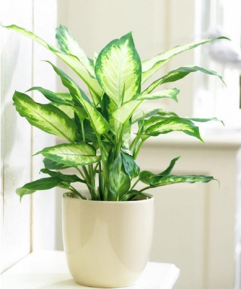 Top 8 cây trồng cho nhà nhỏ, có tác dụng thải độc thần kỳ-1