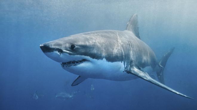 VĐV lướt sóng bị hung thần đại dương 2 mét tấn công - Mất 1 lít máu; hệ quả khôn lường - Ảnh 1.