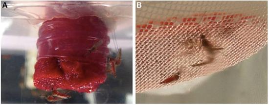 Khoa học lần đầu tiên phát hiện muỗi đực cũng thích hút máu, thế nhưng hậu quả lại vô cùng khôn lường - Ảnh 2.