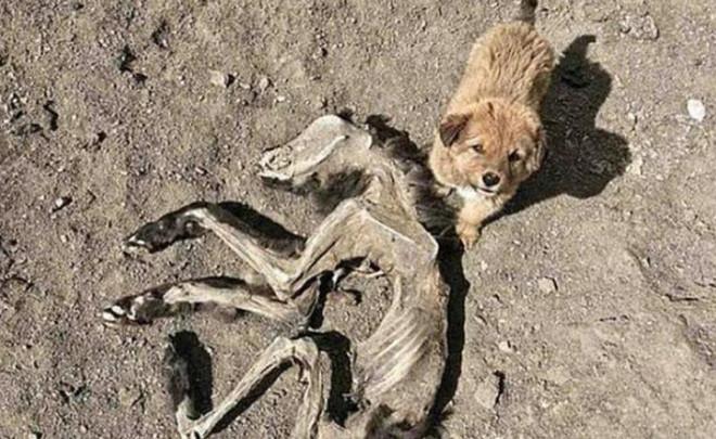 Chú chó nhỏ liên tục sủa vào mặt đất, chủ nhân đào xuống vị trí đó thì thấy cảnh tượng ngỡ ngàng - Ảnh 1.