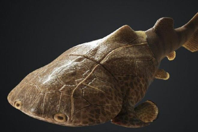 TQ phát hiện dấu tích loài cá da cứng như áo giáp, có họ hàng ở VN - Ảnh 1.