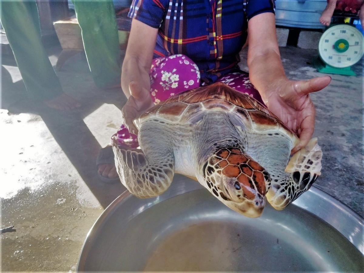 Người đàn ông ở Hà Tĩnh bắt được vích biển quý hiếm - 1