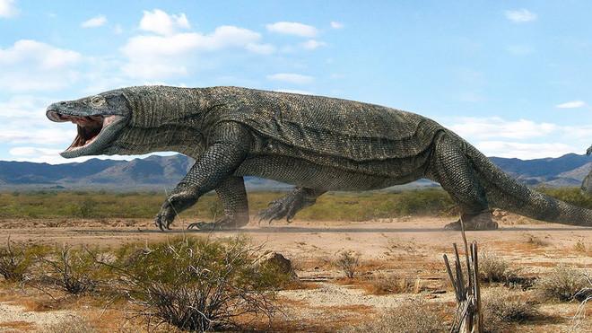 Phát hiện loài cá sấu cổ đại tại Australia có khả năng chạy nhanh trên cạn cách đây 40.000 năm - Ảnh 3.