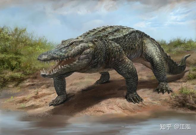 Phát hiện loài cá sấu cổ đại tại Australia có khả năng chạy nhanh trên cạn cách đây 40.000 năm - Ảnh 7.