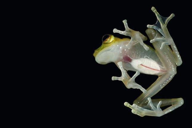 6 loài động vật kỳ dị nhất thế giới - Ảnh 1.