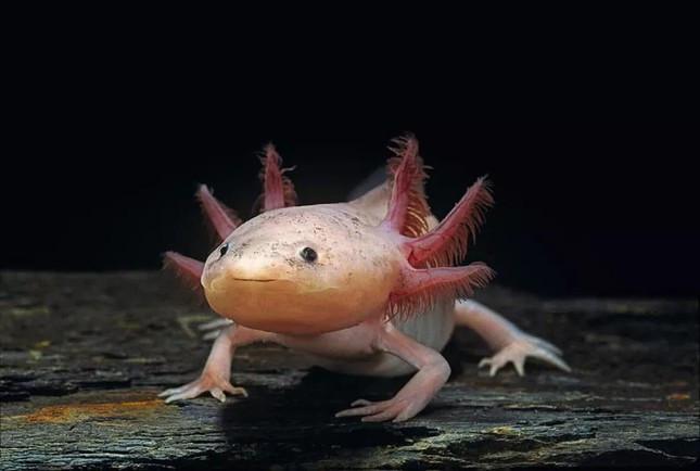 6 loài động vật kỳ dị nhất thế giới - Ảnh 3.