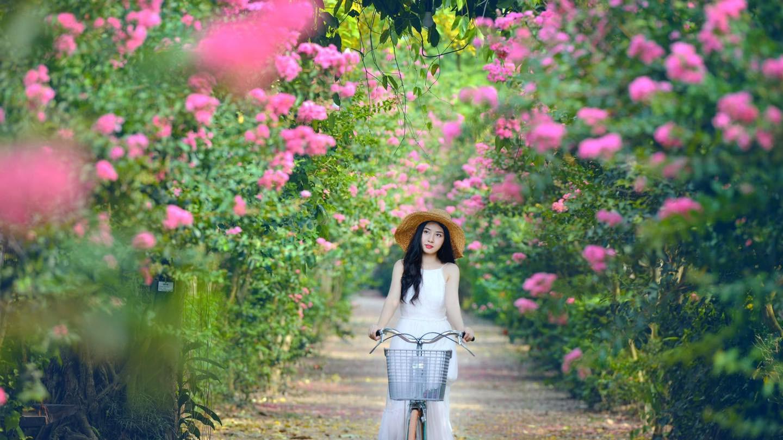 Mê mẩn đường hoa tường vi, đẹp tựa vườn thượng uyển ở trời Âu - 11