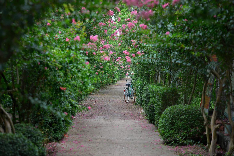 Mê mẩn đường hoa tường vi, đẹp tựa vườn thượng uyển ở trời Âu - 13
