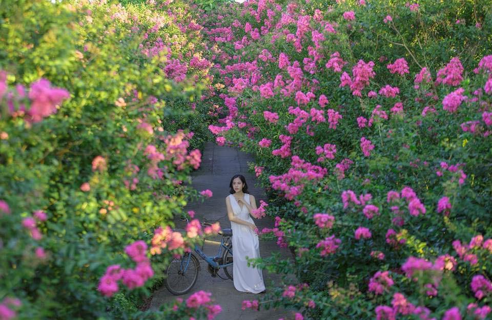 Mê mẩn đường hoa tường vi, đẹp tựa vườn thượng uyển ở trời Âu - 16