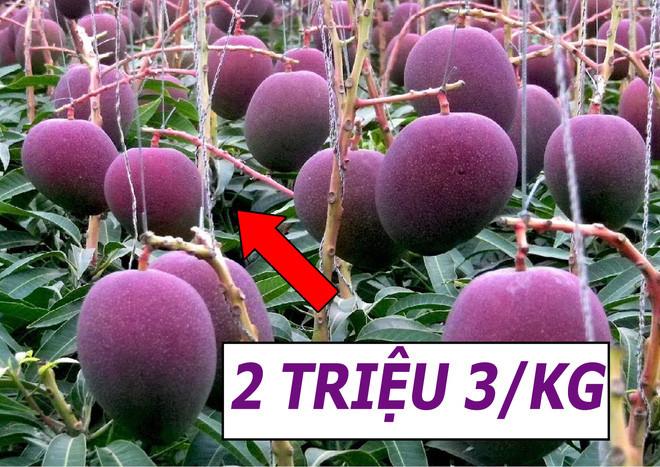 Vườn xoài đắt đỏ nhất Nhật Bản được nâng như nâng trứng, hứng như hứng hoa, giá 2.300.000 đồng/kg! - Ảnh 1.