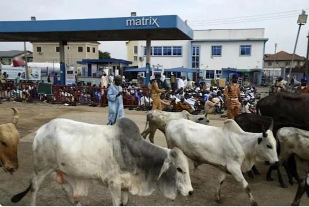 Nigeria: Cac tay sung tan cong 5 ngoi lang, xa sung sat hai 35 nguoi hinh anh 1